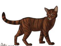 Daughter to Tigerstar who also went to ShadowClan after ThunderClan didn't accept her.