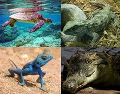 Reptil