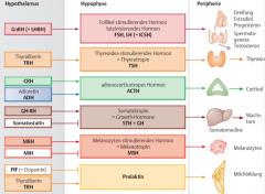 - FSH, LH (Follikelstimulierendes/Luteinisierendes Hormon)   - TSH (Thyreotropin)   - ACTH (adrenocroticotropes Hormon)   - STH = GH (Somatotropin/Growth-Hormone)   - MSH (Melanotropin)   - Prolaktin