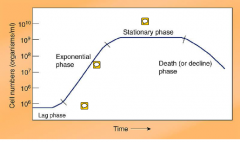 bacterial growth kinetics exponential phase