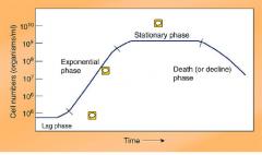 bacterial growth kinetics death