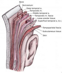 - Layers of fibrous connective tissue, which extends beyond the muscle to become its tendon - Skeletal muscle is covered by fascia