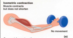 - Sometimes muscles contract, but they do not shorten and no movement occurs--this is called an isometric contraction.  - Muscles that keep our bodies upright when standing or sitting involve the isometric contractions of muscles that oppose gravity