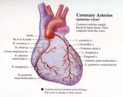 Anterior Cardiac Branches supplies ....right atrium   Nodal branches .... SA & AV node   Marginal Artery ...... right VENTRICLE   Posterior interventricular artery..... Diaphragmatic surface of BOTH venricles , posterior 1/3 of lower septum