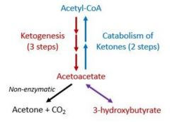 The process of formation of ketone bodies from acetyl-CoA.