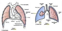 Surface area of visceral pleura has shrunk due to collapsed lung here..but not main point    3-Mediastinal Pleura = Phrenic Nerve  4-Coastal Pleura = Intercostal nerves (block here, way to decrease pain)  5-Diaphgramtic pleura= Phrenic n.  ...