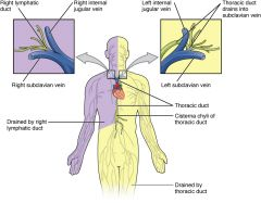 The thoracic duct drains into the Left Subclavian vein   The thoracic duct drains the entire, EXCEPT what area? The right upper limb hemisphere, which drains to the right lymphatic duct