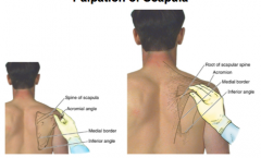spine of scapula, acromial angle, medial border, inferior angle