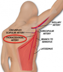 thoracodorsal artery