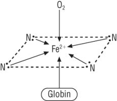- 4 coordinate bonds from Nitrogen in the haem structure   - 1 coordinate bond from the globin protein   - 1 coordinate bond from O2
