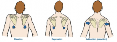 LEVATOR SCAPULAE:      What is the action?