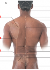 What is the vertebrae level of:      root of the spine of the scapula      inferior angle of scpaula      iliac crest