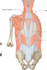 C7-T3 to upper ribs      T11-L3 upper lumbar to lower ribs