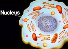 Nucleus   Is generally in the center. It is like the brain of the cell.