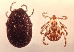 Phylum Arthropoda, Class Arachnida Ticks & Mites Adults have four pairs of legs & juveniles have only three. Includes  Family Ixodidae: Hard Ticks Family Argasidae: Soft Ticks