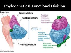 Vestibulocerebellum (connected to vestibular sys) - balance    Spinocerebellum - Muscle tone & posture    Cerebrocerebellum - Muscular coordination planning movement