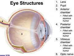 Lens Pupil Anterior chamber Posterior chamber Vitreous chamber Optic nerve