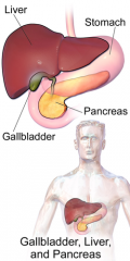 vesica fellea  (eng. gallbladder)