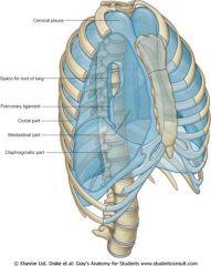 costal diaphragmatic mediastinal cervical (cupola)