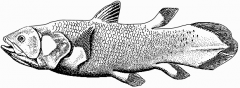 Lobe-Finned Fishes