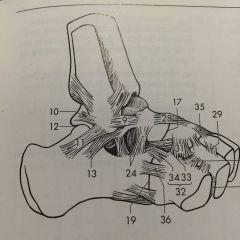 # 9 band från yttre fotknölen (på fibula) till den laterala delen av collum tali.