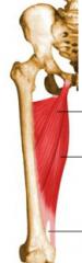 dorsalt om m. adductor longus som syns på bild.