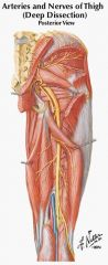 superior gluteal artery