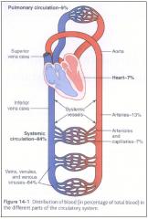 1. Aorta = leave heart   2. Arteries = high-pressure conduits   3. Arterioles = gates   4. Capillaries = exchange vessels   5. Venules = return from capillary   6. Veins = blood reservoirs   7. Vena Cavas = reenter heart