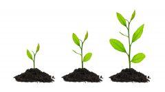 Crecer /verbo Grow up es hacia arriba, grow es crecer en edad o a los lados