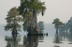 -Dismal Swamp