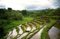 ¿Cuál es el cultivo característico de la agricultura intensiva de regadío en las regiones tropicales?