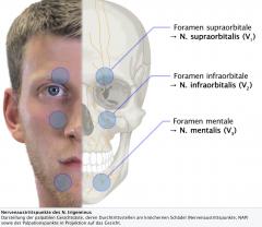 - Bestreichen der drei unterschiedlichen Gesichtsregionen - Palpation der Nervenaustrittspunkte  - Mund öffnen und schließen lassen, gleichzeitige Palpation der Masseteren