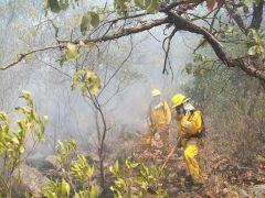Atención de Incendios Forestales en Coordinación con los tres niveles de Gobierno y la sociedad en general.