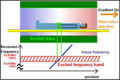 A field gradient is applied causing protons to precess at different speeds spatially. A specific RF pulse is released with a narrow frequency bandwidth which will excite protons in a selected region of the spatial curve. The stronger the magnet, t...