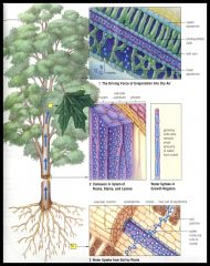 Plants obtain gases, nutrients, minerals and water via internal fluids