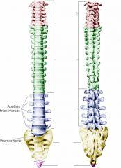 Zona verde y número de vértebras