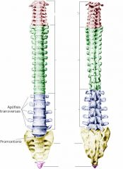 Zona Azul y cantidad de vértebras