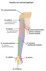 - Sensibilitätsausfall der proximalen Oberarmaußenseite (sensibler Hautast: N. cutaneus brachii lateralis superior)  - Parese der Armabduktion → Motorischer Ausfall des M. deltoideus und des M. teres minor