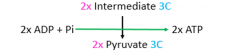 2 ATP are formed by substrate level phosphorylation as the intermediate is converted to pyruvate.