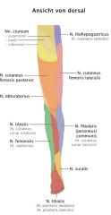 -Sensibilitätsausfälle: Schmerzen und Parästhesien am lateralen Oberschenkel