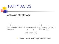 Fatty acyl-CoA synthetase(cytosol)     Coenzyme A forms thioesterbonds with carboxylic acids