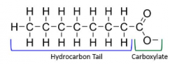 Fatty acids with only single bonds between carbon atoms in the hydrocarbon chain