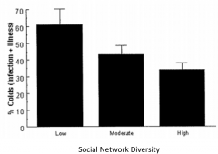 Number of social relationships (family/friends/group membership/online networks); social integration Operate via direct effects  Functional content and quality of social relationships