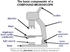 BIO 141 - Lab Exam 1  The STAGE - The flat platform located beneath the objective lenses on which the microscope slide is placed. The stage has a hole in the middle, the light aperture, through which light is focused on the slide. The slide may be held