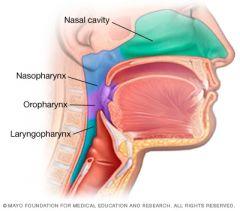 Nasopharynx - Structures •From Internal Naristo Uvula   •Includes   –Eustachiantubeopening   –Pharyngealtonsils(adenoids)