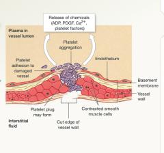 Vascular phase of hemostasis