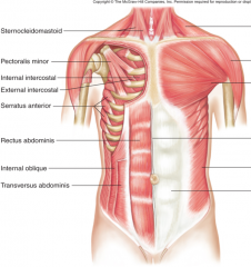 Muscles   •Internal intercostals   •Abdominals