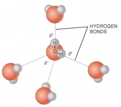 Why would you expect ammonia (NH3) to form hydrogen bonds with water molecules?