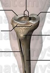 skrovligt skelettbenutskott på framsidan av knät