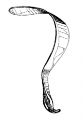 Identify the following retractor